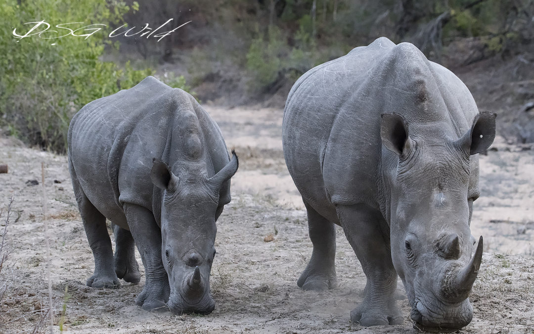 Rhino Revolution Needs Our Help ASAP!